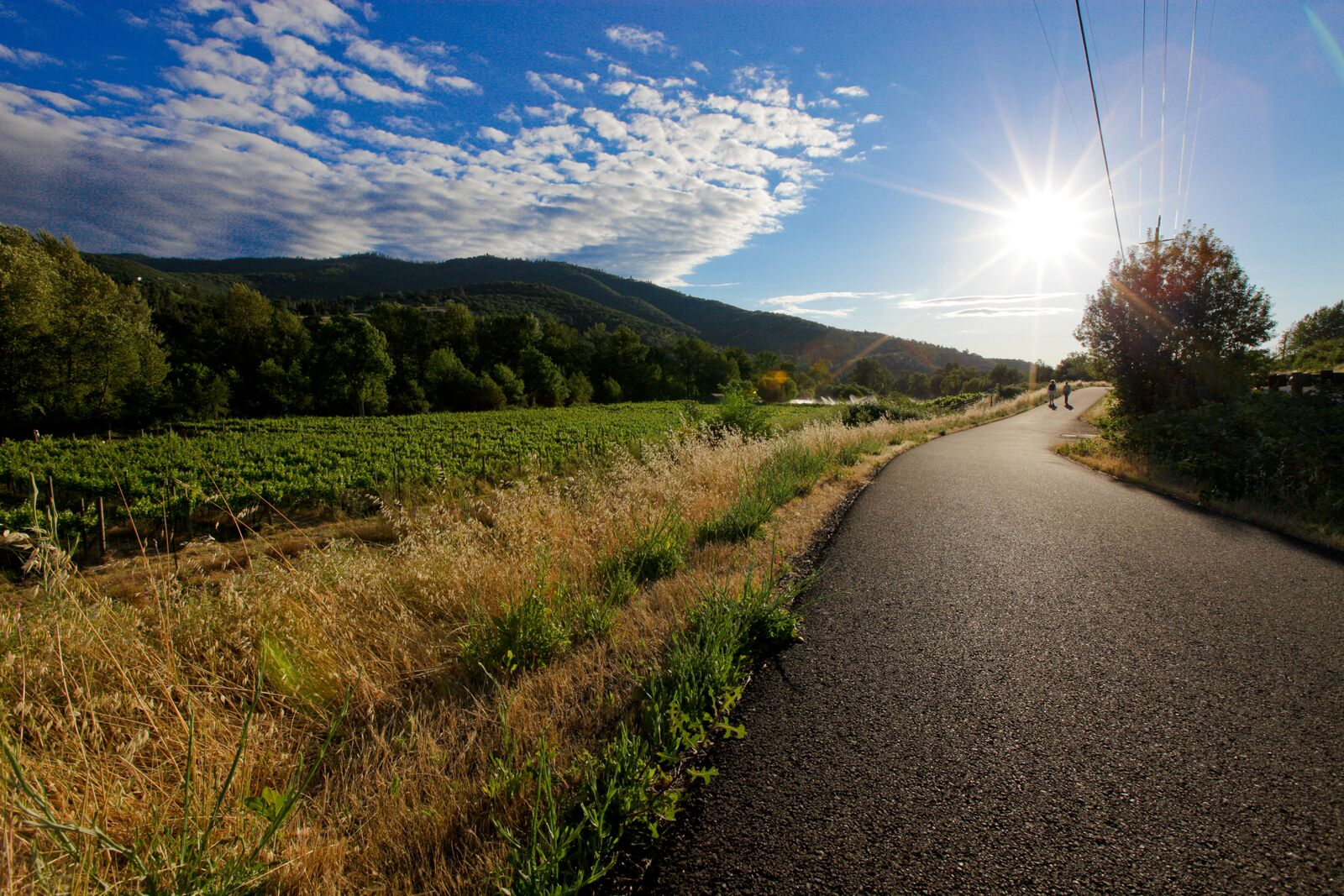 The views along the Bear Creek Greenway, a bicycle path that spans 40ish miles, winds through vineyards, along Bear Creek, and connects much of the neighboring cities.