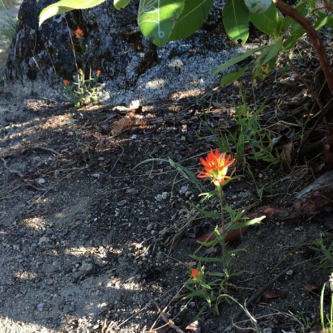 A wildflower akin to a flame, seen during the lunch ride.
